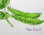 peas watercolor original botanical painting -  spring peas and pea pods