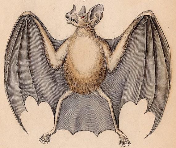 1838 bat vampire antique engraving print