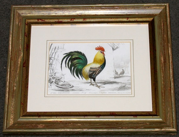 1861 framed ROOSTER COCK antique engraving rare and elegant and glorious bird print