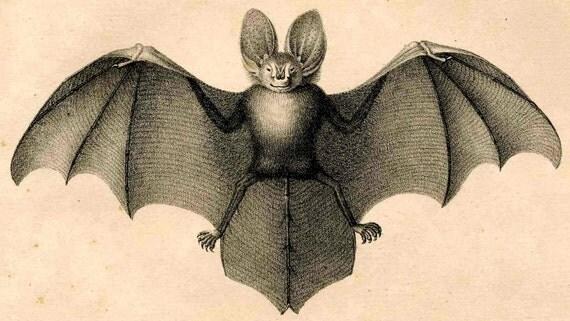 1824 bat antique original scary print - java bat