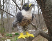 Mr. Peregrine Falcon, needle felted bird raptor sculpture