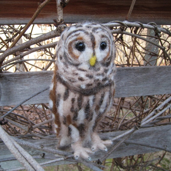 Mr. Barred Owl