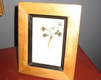 Framed & Pressed Wildflowers