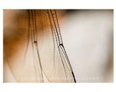 Intricacies - 5x7 print, off white mat