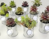 12 Succulent Shower favors, Rock Your Party  with Mini Sprinkling Watering Cans  for FavoRs, bridal showers, baby showers,