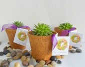 1 Succulent Plant and 1 coconut pot for Wedding, Shower or Garden Party