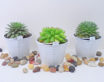 25  Succulent Plants,  WHITE  Pails  for Wedding, Baby Shower, Party Favors, and special events