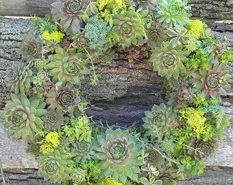 Winter Hardy Succulent Wreath, Holiday Ribbon 14 -15 inch  WREATH