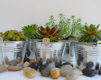 Succulent Plant Favors in a pail bring a smile to your guest?