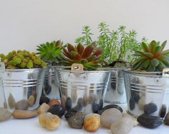 Succulent Party Favors / Baby Shower / Bridal Shower / Wedding Favors / Garden Party Favors