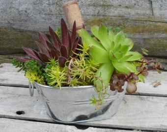 Oblong Succulent Dish Garden for Wedding, Baby Shower, Corporate Office Desk,  or Favorite Secretary