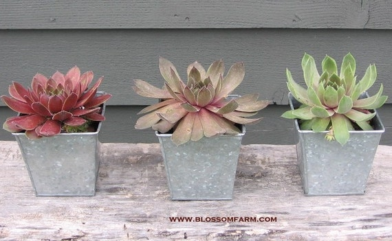 Succulent Garden Table Top Planter