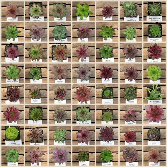 Types Of Succulent Plants Names Pictures To Pin On