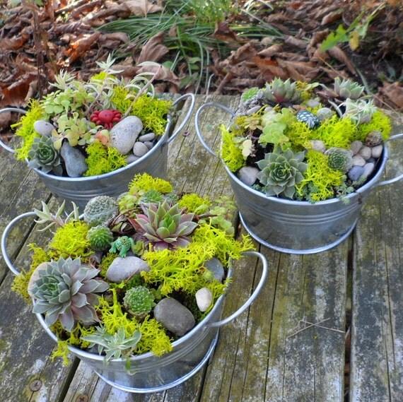 Items similar to Succulent Dish Garden with a garden