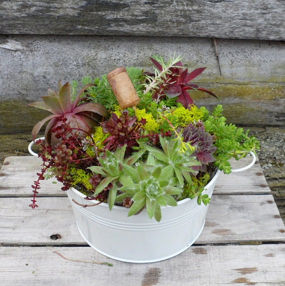 Succulent Centerpiece, 10 inch White Planter Filled with Colorful Garden Gems