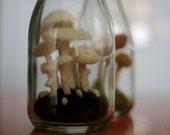 Snowy White Mushroom Terrarium