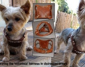 Gangs of New Yorkie Harness & Collar Set for Lacy - Exclusive Posting
