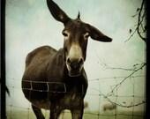 Donkey - 8x8 fine art print