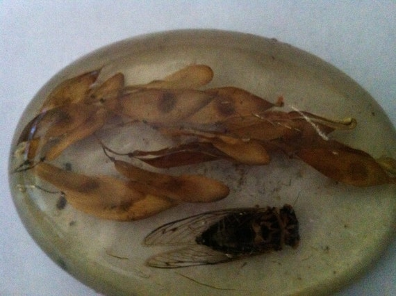 Cicada Katydid Insect in Resin Paper Weight // Oddity // Taxidermy // Creepy Home Decor // Macabre Decorations // Vintage Curiosities // Bug