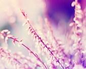 Heather photograph, winter tones, pink, blue, purple, bokeh print, nature photography for beautiful home decor
