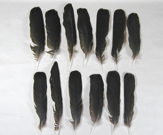 Twelve Black Crow Feathers