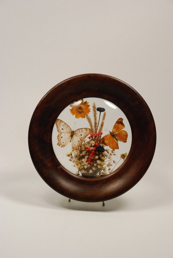 Vintage Preserved Butterflies And Flowers Convex Glass Wood