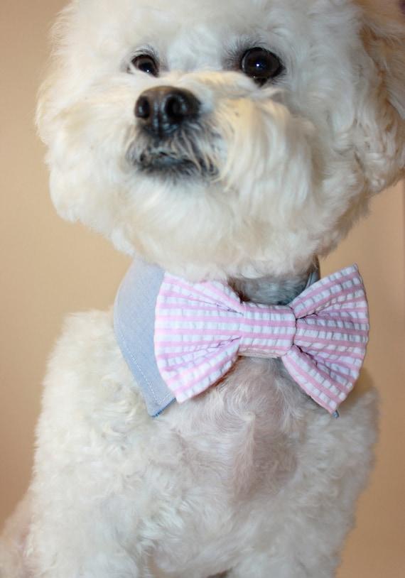 dog bow tie and shirt collar - wedding dog collar- seersucker bow tie