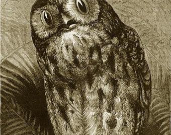 8x10 Print  - Egyptian Owl