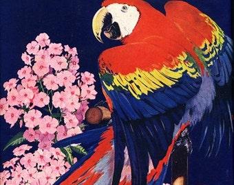 8x10 Print  - Parrot