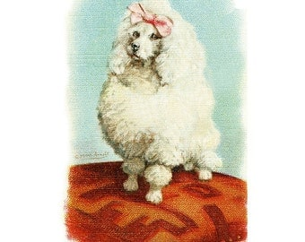 Package of 12 Blank Note Cards,  Toy Poodle