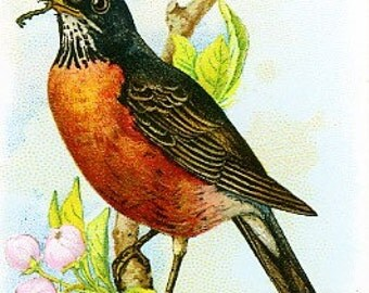 Package of 12 Blank Note Cards,  Robin
