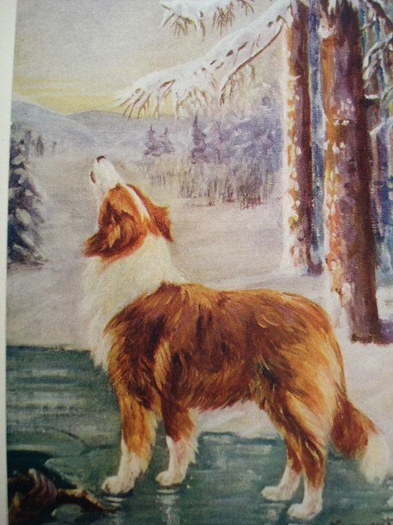 Howling Collie Vintage Children's Book Illustrations