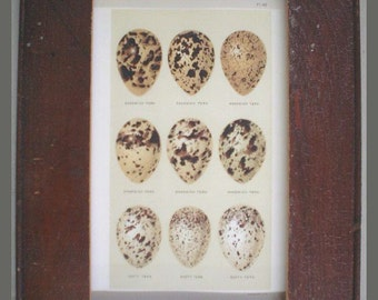Great Egg Print Recycled Wood Frame E6