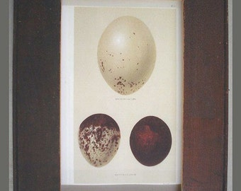 Great Egg Print Recycled Wood Frame E8