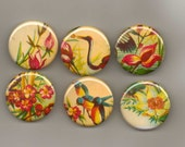 Set of 6 pinback buttons vintage birds and flowers 1.25 inch