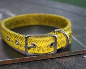 ON SALE Leather Dog Collar - Genuine Snakeskin Yellow and Black - 16 inch