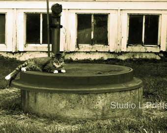 Cat Nap - 8x12 Black and White Metallic Print