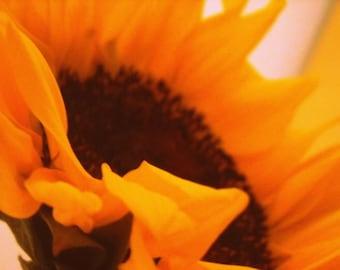 sunflower photo, flower photography, orange, yellow, golden, amber, 60s, 70s, autumn, fall, nature, garden, teen bedroom - SUNFLOWER POWER