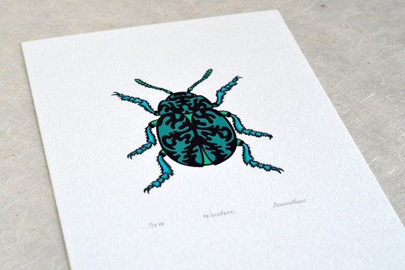 Beetle / Coleoptera 'specimen'  - Limited edition two-colour screenprint with hand-coloured details