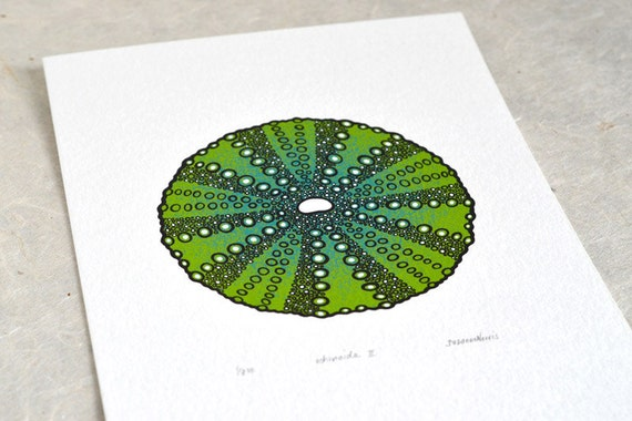 Sea Urchin / Echinoida II 'specimen' (dark) - Limited edition three-colour screenprint with hand-coloured details