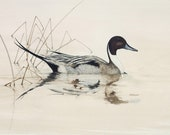 Pintail Duck - Painting