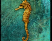 Sea Horse No. 1 - 8 in x 8 in Altered Photograph