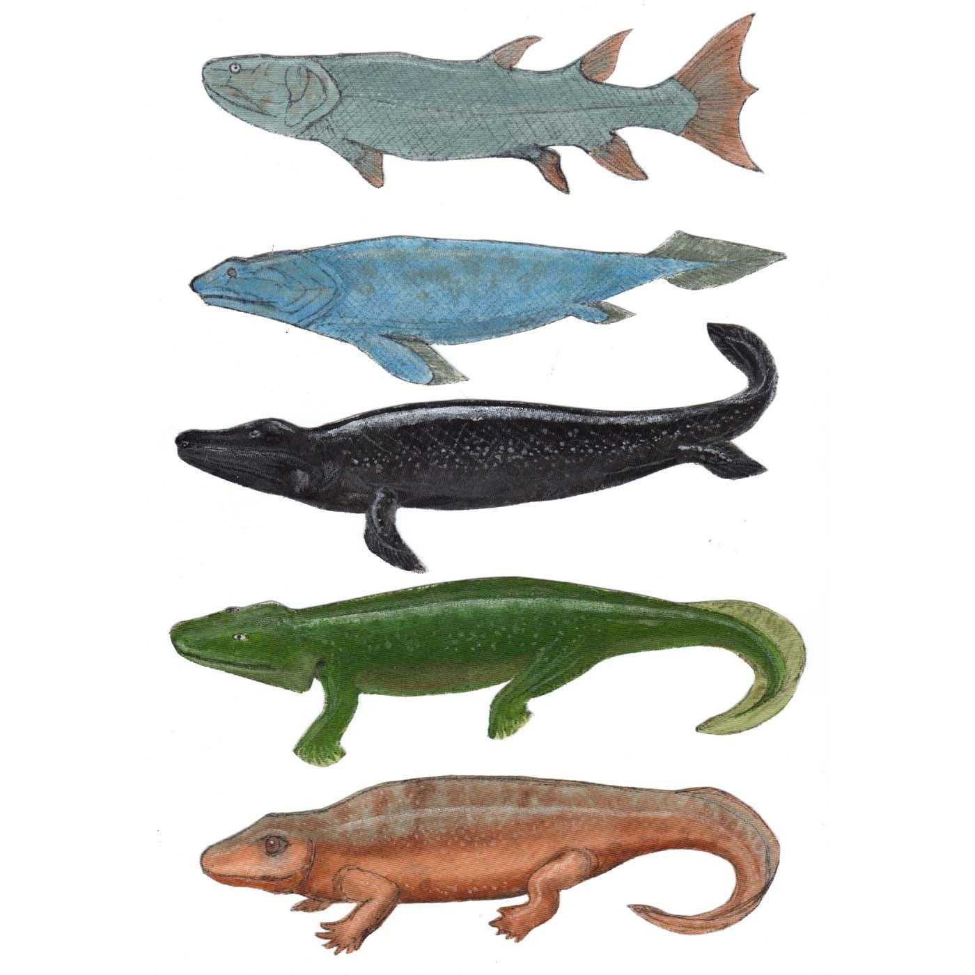 Woohoo Science Tetrapods fish to amphibians hand painted Tetra Fish Species