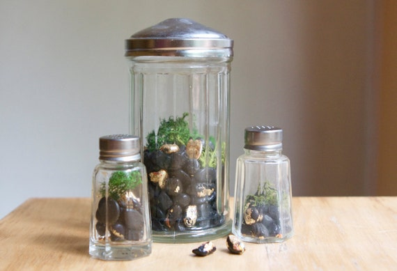 Three Terrariums in Vintage Containers, Pixie Homes