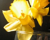 Dried Daffodil: Real Dried Flower