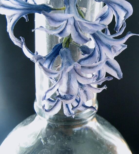 Dried Flower Light Blue Hyacinth Sprig