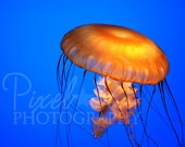 Jellyfish - 8x12 Photograph - RESERVED FOR goingtothesun