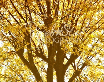 Golden Fall Leaves - 5x7 Photograph