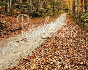 Tennessee Fall Road - 10x15 Photograph