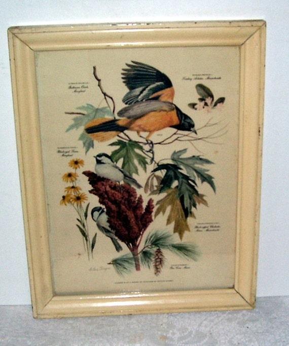 Vintage Arthur Singer Baltimore Oriole Framed Print